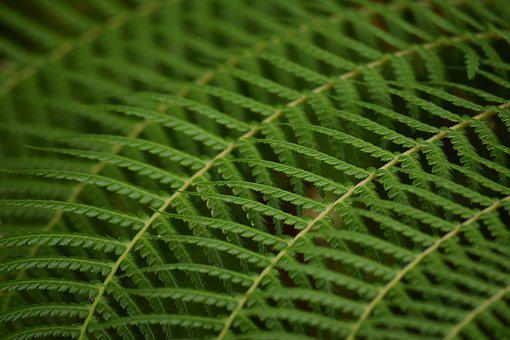 Leaves, Green, Plant, Fern, Repeated, Background, Mood