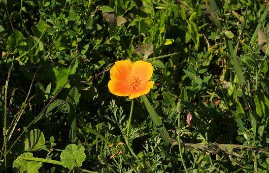 Small Orange Flower, Orange, Flower, Yellow, Small
