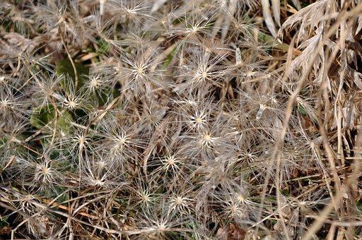 Flower, Star, Grass, Ornament, Curls