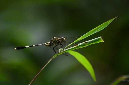 Dragonfly, Green, Forest, Insect, Nature, Wings, Summer