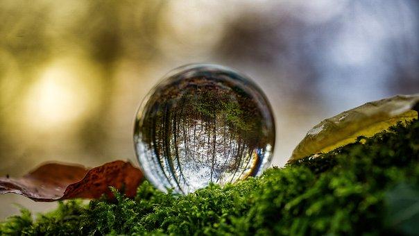 Glass Ball, Autumn, Ball, Mirroring, Transparent
