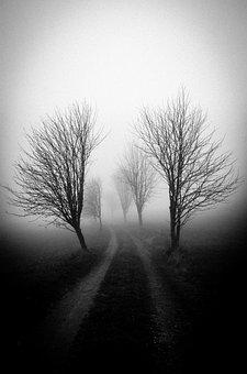 Fog, Tree, Shadow, Mood, Melancholy, Autumn, Mysterious