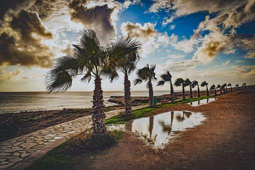 Trees, Path, Palm Trees, Nature, Landscape, Autumn