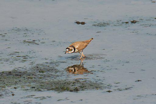Small, Wild, Wildlife, Bird, Migratory, Nature, Natural