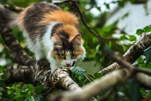 Cat, Tree, Wild, Nature, Forest