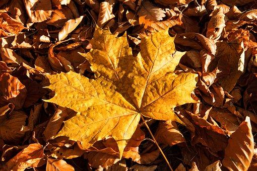 Fall Foliage, Leaves, Fall Color, Color, Autumn, Nature