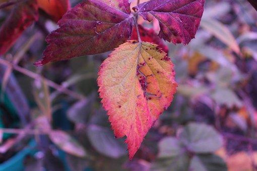 Autumn, Leaf, Nature, Leaves, Fall Color, Mood