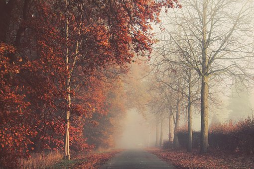 Autumn, Leaves, Gold, Red, Wood, Log, Nature, Fog