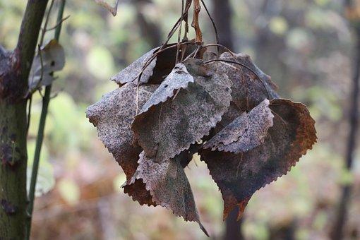 Autumn, Leaves, Tree, Nature, Fall Foliage, Colorful