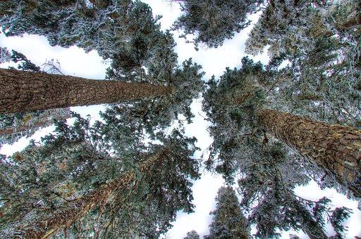 Angle, Background, Beautiful, Beauty, Beech, Branch