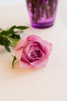 Beauty, Birthday, Bcelebration, Color, Day, Decoration