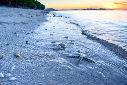 Starfish, Sand, Beach, Sunrise, Sea, Ocean, Water