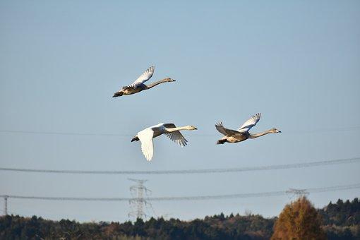Animal, Sky, Morning, Bird, Wild Birds, Waterfowl