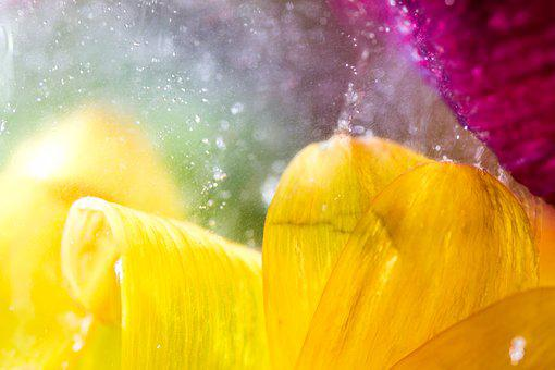 Tender, Sensitive, Flower, Blossom, Bloom, Close Up