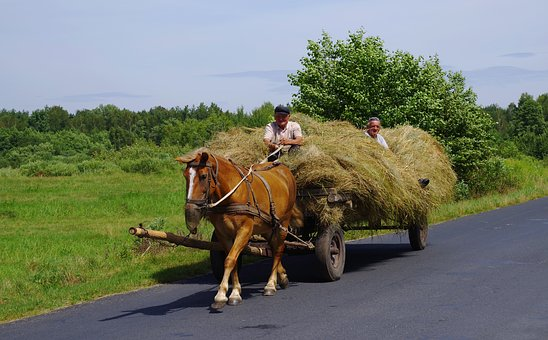 Machine Hay Horse, Cart Horse, Hay, Agriculture