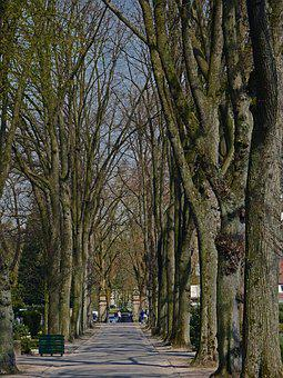 Old Avenue, Cemetery, November, Spawns Wan, Rest