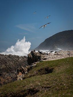 South Africa, Coast, Surf, Gulls, Wave, Wind, Dramatic