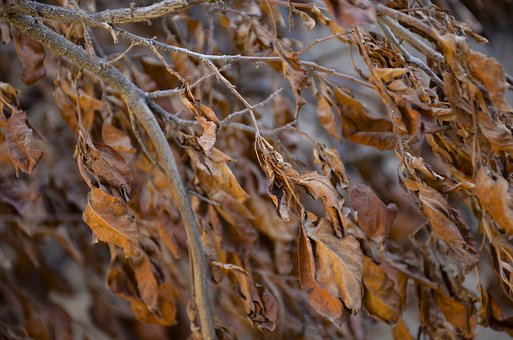 Autumn, Leaf, Texture, Nature, Colorful, Tree, Wood