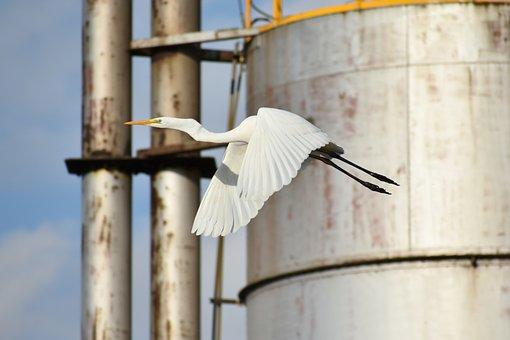 Animal, Factory, Tank, Pipe, Chimney, Bird, Wild Birds