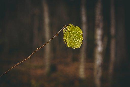 Leaves, Autumn, Fall, Nature, Colorful, Mood, Landscape