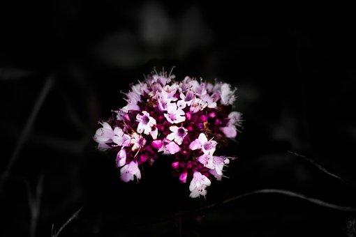 Fleure, Black, Flower, Plants, Nature, Close, Red