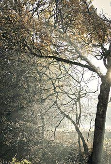 Mystical, Tree, Forest, Fog, Autumn, Mood, Light, Magic