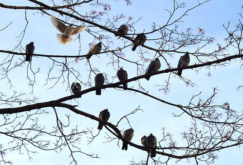 Pigeons, Birds, Group, Series, Meeting, Tree
