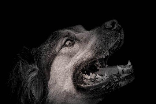 Dog, Animal, Portrait, Animals, Snout, Puppy, Head