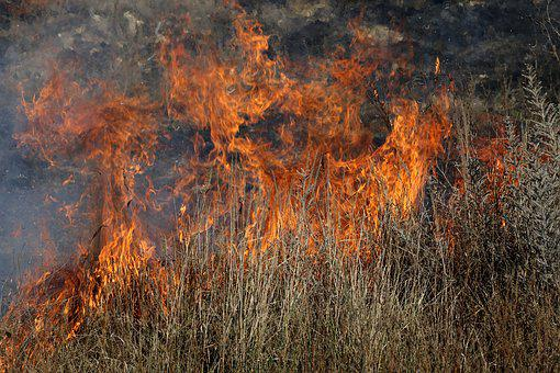 Fire, Vegetation, Dry, Flame, Heat, Burning, Hot