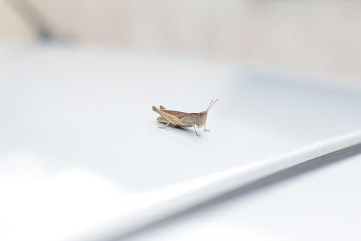 Cricket, Car, Insect, Beetle, Nature, Wild, Creature