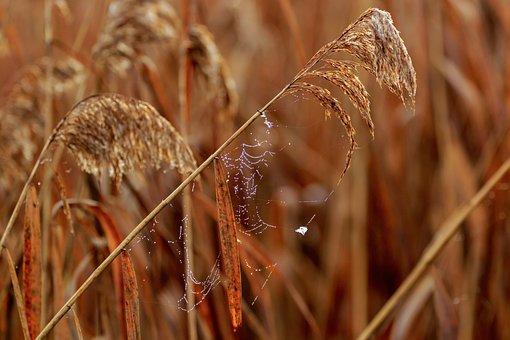 Landscape, Nature, Autumn, Reed, Spring Lake, Dew