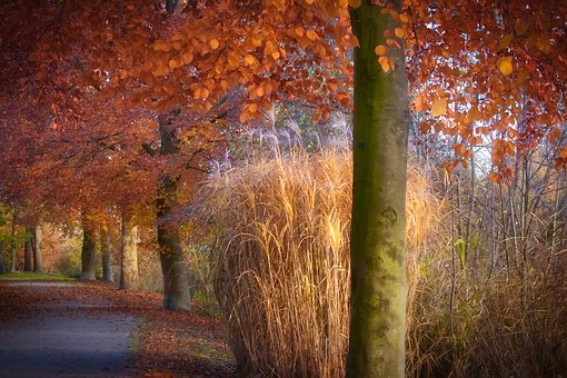 Autumn, Park, Leaves, Book, Grasses, Nature, Tree