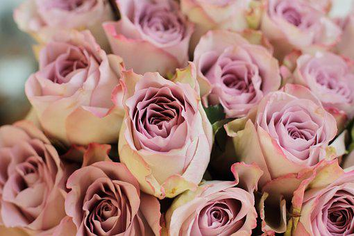 Rose, Pink, Flower, Bouquet, Roses, Flowers, Love