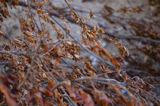 Autumn, Leaf, Leaves, Nature, Colorful, Mood, Maple