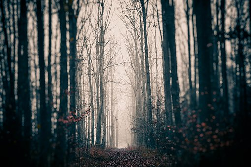 Cryptically, Gloomy, Mystery, Forest, Mysterious