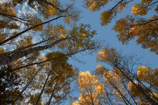 Autumn, Sky, In The Fall Of, Nature, Trees, Landscape