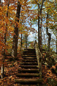 Stairs, Forest, Woods, Nature, Outdoor, Tree, Leaves