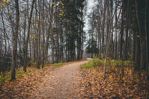Landscape, Path, Autumn, Leaves, Brown, Orange, Trees