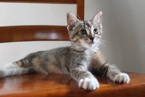 Small, Pets, Sweet, Kitty, Feline, Cute, Kitten