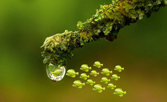 Drop Of Water, Water, Fish, Reflection, Branch, Rain