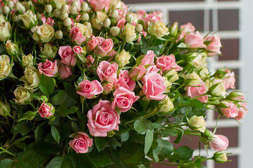 Rose, Flower, Pink, Bouquet, Roses, Flowers, Red