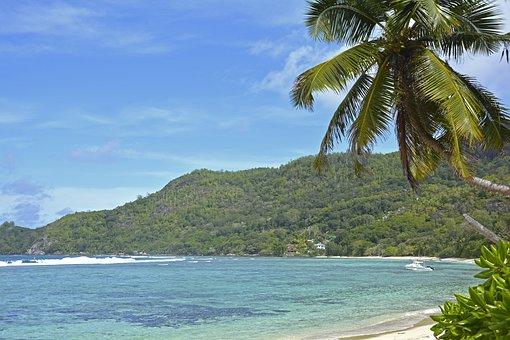 Seychelles, Praslin, Palm Trees, Sand, Island, Beach