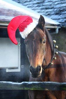 Santa, Christmas, Reindeer, Xmas, Holiday, December