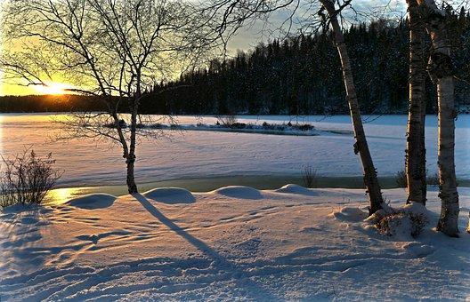 Landscape, Winter, Nature, Trees, Birch, Cold, Sky