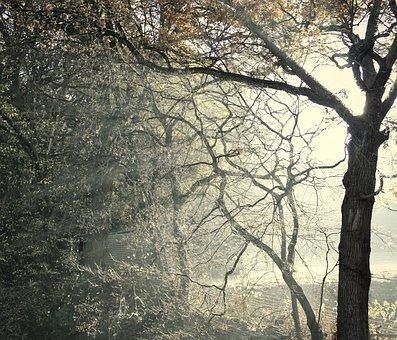 Mystical, Forest, Dream, Atmosphere, Fantasy, Mood, Sun