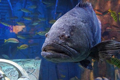 Fish, Dubai, Sea, Aquarium, Types, Travel, Swim, Water