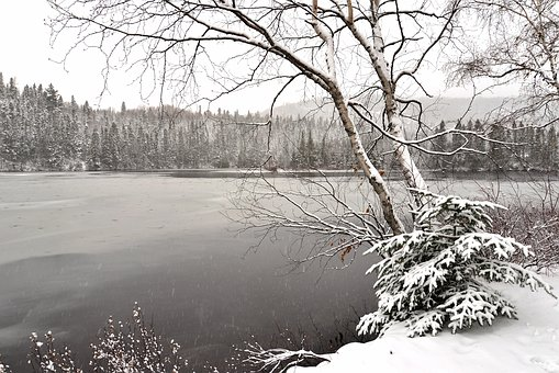 Landscape, Winter, Cold, Nature, Trees, Birch, Snowy