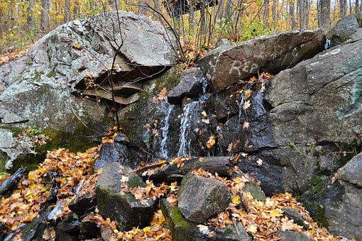 National Park, Autumn, Nature, Water, Forest, Woods