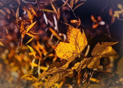 Autumn, Leaves, Mood, Autumn Colours, Yellow