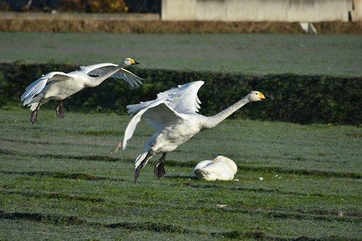 Animal, Morning, The Countryside, Waterside, Bird
